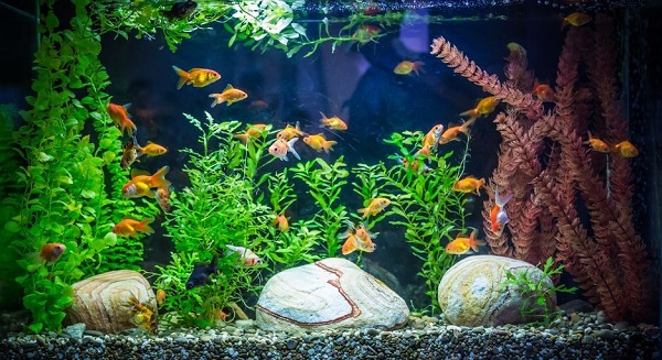 How To Decorate Fish Tank At Home