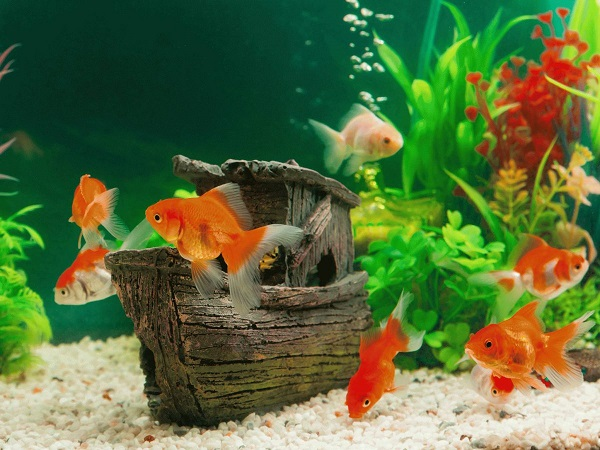 10+ Homemade Fish Tank Decoration Ideas U2013 DIY