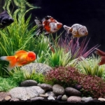 How to Decorate a Fish Tank with Household Items