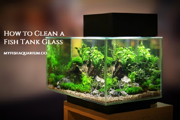 How to Clean a Fish Tank Glass
