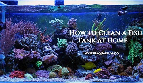 How to Clean a Fish Tank at Home
