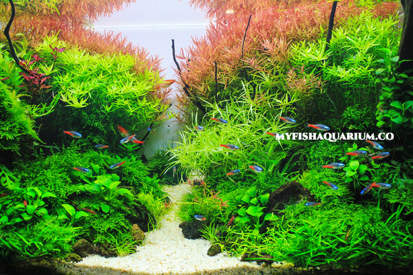 High Light Aquarium Plants