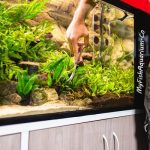 How to Clean Algae from Fish Tank